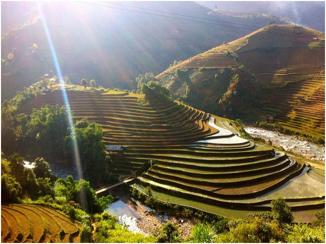 Rice terraces of Mu Cang Chai