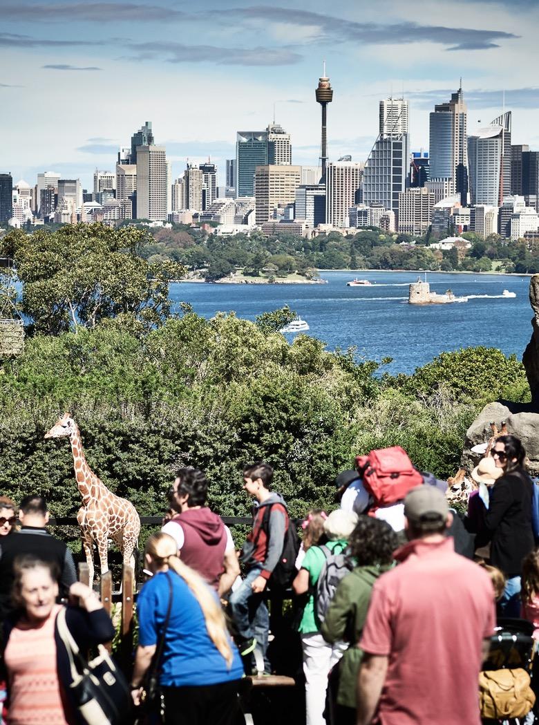 taronga zoo sydney australia | zoo in sydney | zoo in australia