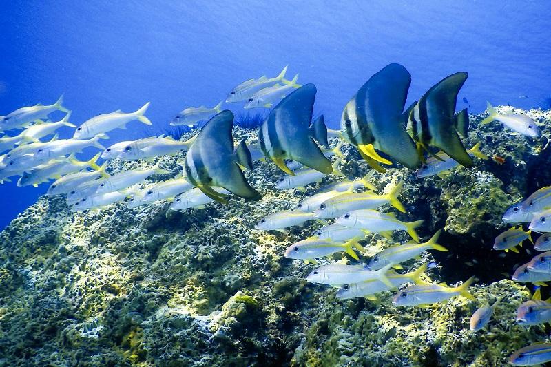tropical fish, Thailand
