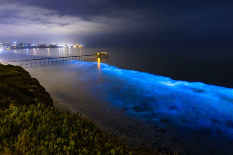 bioluminescent beach - a travel destination in Maldives